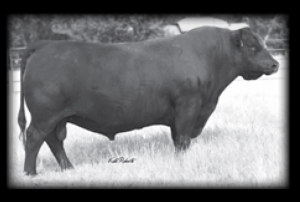 Redland Ranger 164